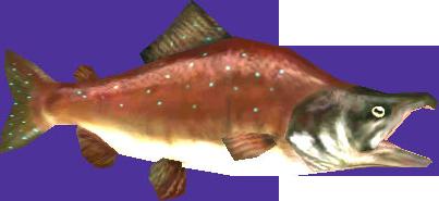File:Reekfish.png