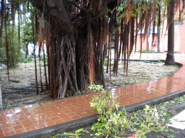 檔案:凡那比颱風的摧殘-南台科技大學2.jpg