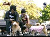 Xiao-qiao-zhou-yu-dogs