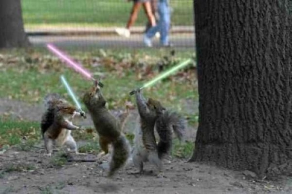 File:Squirrel-jedi-lightsaber-duel.jpg