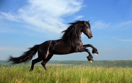 File:Horse1.jpg