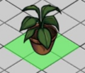 Philodendron hederaceum.png