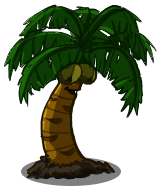 File:Coconut Tree.png