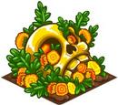 Marigold Crop
