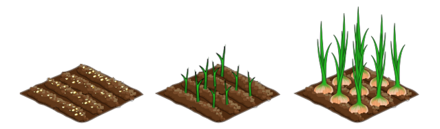 File:Onion stages.png