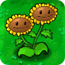 Twin Sunflower2-1-