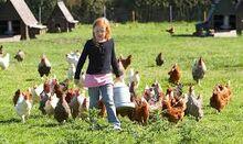 Aviv and Chickens