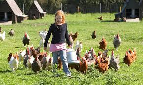 File:Aviv and Chickens.jpg