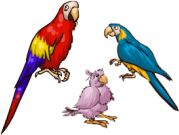 File:Parrot.png
