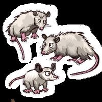 C-EOpossum
