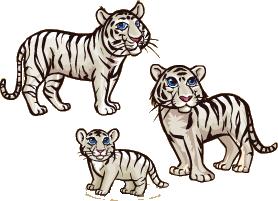File:White Tiger.png