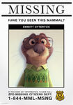 Emmit Otterton missing poster