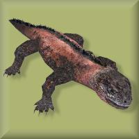 Iguanamarine