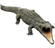 CrocR