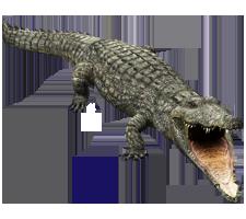 File:CrocR.png
