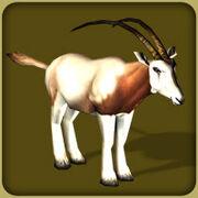 Scimitar Horned Oryx2
