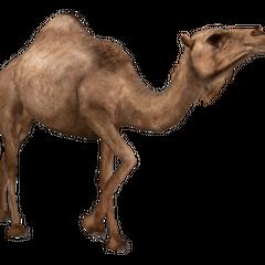 Dromedary Camel remake.