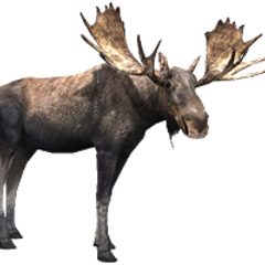 Moose remake.