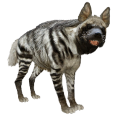 Striped Hyena remake.