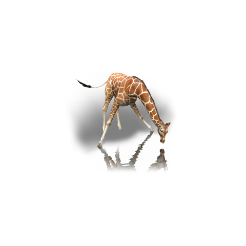 The Reticulated Giraffe in Radical Remake.