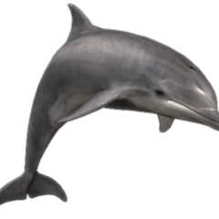 Bottlenose Dolphin remake.