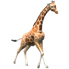 Reticulated Giraffe remake (female).