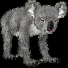 Koala remake.