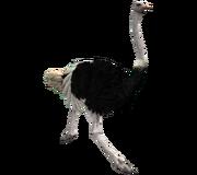 OstrichRm