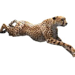 Cheetah remake.