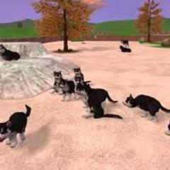 Husky pups in the tundra biome.
