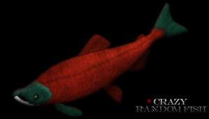 File:Sockeye-salmon-316694796.png