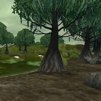 Preview wetland