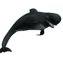 Short-Finned Pilot Whale remake.