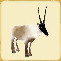 File:Tibetanantelope.jpg