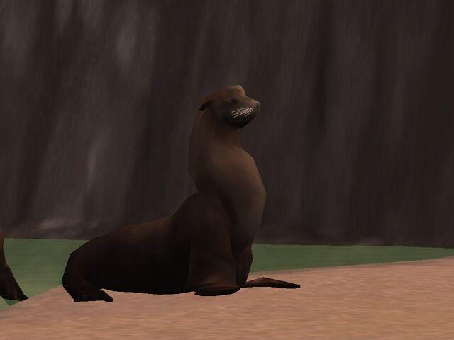 File:ZT2 California Sea Lion.jpg