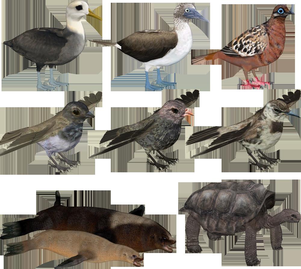 Image - Interesting Islands- Galapagos Animals.png