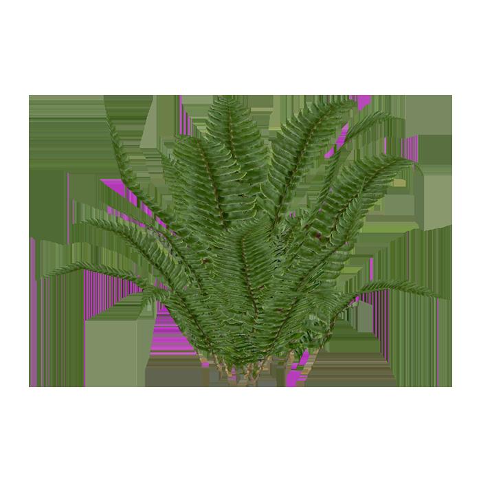 western sword fern  aurora designs  zt2 download library tropical rainforest animals clipart amazon rainforest animals clipart