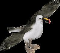 AlbatrossYellownosed Zerosvalmont