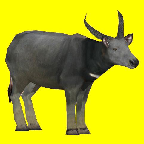 Wild Asian Water Buffalo Jannick Zt2 Download Library