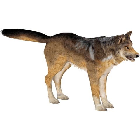 File:Mexican Wolf (Bunyupy).png