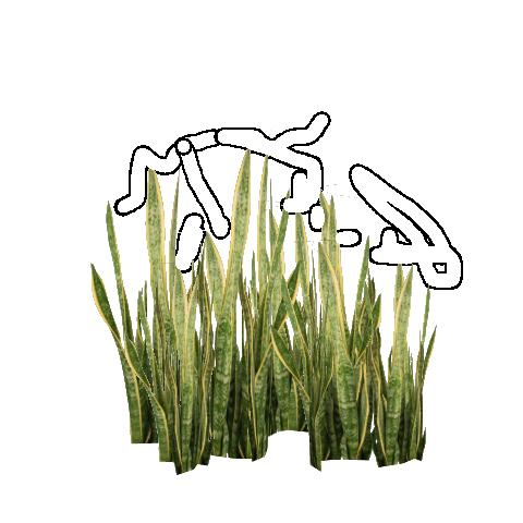 Snake Plant (FelipeepileF) | ZT2 Download Library Wiki ...