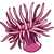 SeaCreatures Anemone-icon