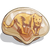 PaintedShells Jaguar-icon