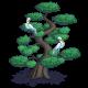 Big Cypress Tree-icon