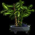 Bonsai Bamboo-icon.png
