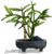 Bonsai Bamboo-icon