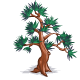 Hinoki Cypress-icon