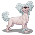 ChineseDogs Hairless Dog-icon.png