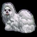 ChineseDogs Shi Tzu Dog-icon.png