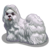 ChineseDogs Shi Tzu Dog-icon